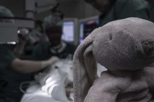 grey gray elephant plush toy queen fabiola children's university hospital