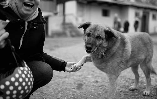 photo dog grayscale of woman holding dog animal free for commercial use images