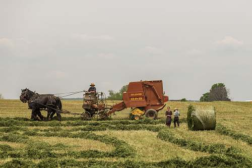 farm woman standing near brown combine harvester hay
