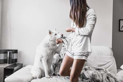 photo person woman standing beside white dog sitting on sofa human free for commercial use images