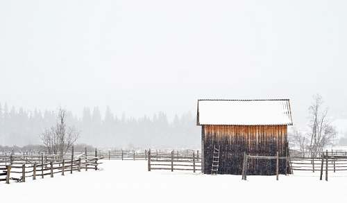 winter white and brown shed snow