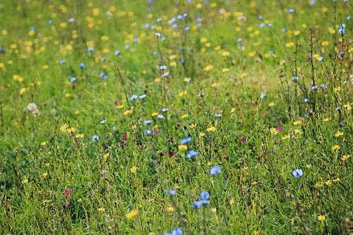 grassland assorted-color flowers outdoors