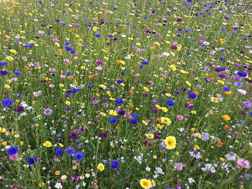 grassland field of white, blue, and yellow-petaled flowesr outdoors