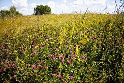 photo grassland pink-petaled flowers outdoors free for commercial use images
