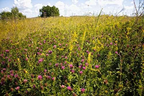 grassland pink-petaled flowers outdoors