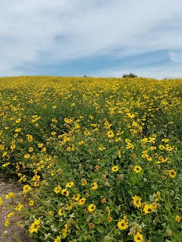 grassland yellow-petaled flowers outdoors