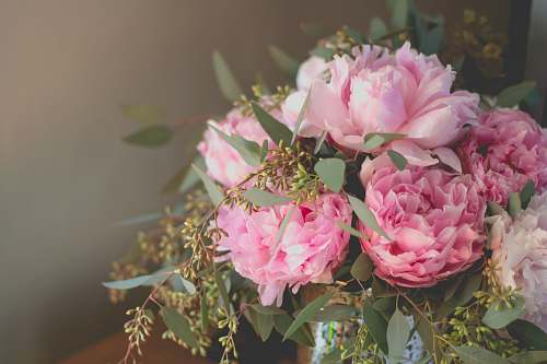 photo flora close-up photo of pink petaled flowers bouquet peony free for commercial use images