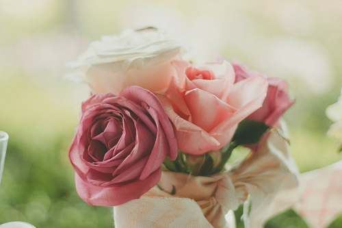 rose pink and white roses closeup photography wedding