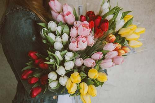photo floral woman carrying assorted-color tulip flower lot flower bouquet free for commercial use images