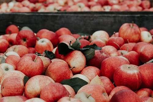 fruit bunch of apples apple