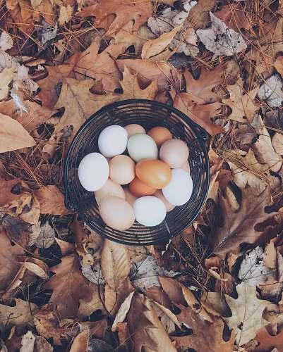 farm white and brown eggs eggs