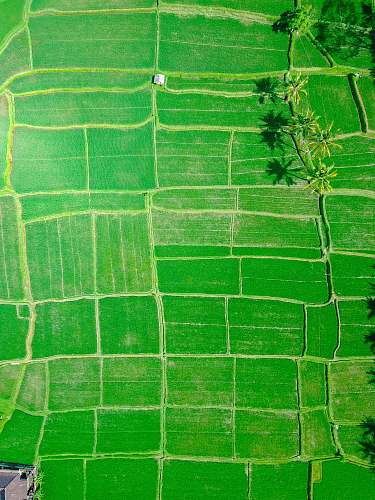 ubud aerial view of rice paddy indonesia