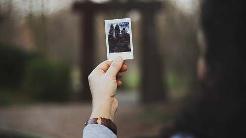 polaroid person holding photo of trees picture