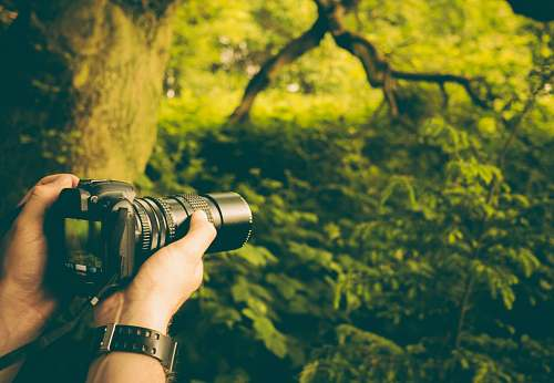 nature person holding DSLR camera taking picture of trees camera