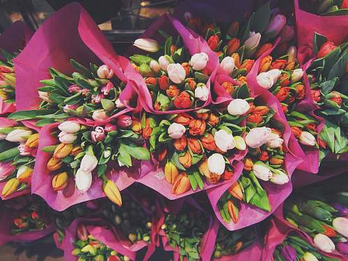 flower red, yellow, and white flowers bouquets tulip
