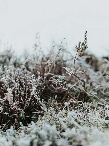 nature bushes with snows outdoors