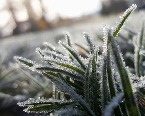 snow shallow focus photography of grass covered with snow frost