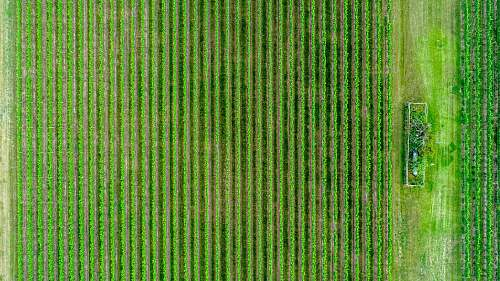 green aerial photography of green fields outdoors