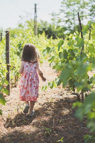 countryside girl walking near plants vineyard