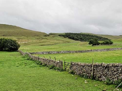 outdoors green grass field