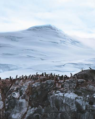 photo outdoors group of penguins near mountain covered with snow ice free for commercial use images