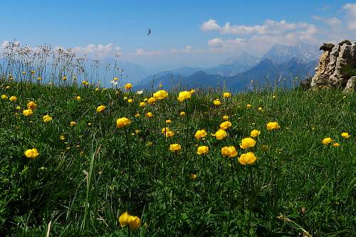 field bed of yellow-petaled flower grassland