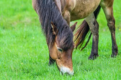 photo grassland brown horse on green grassland field free for commercial use images