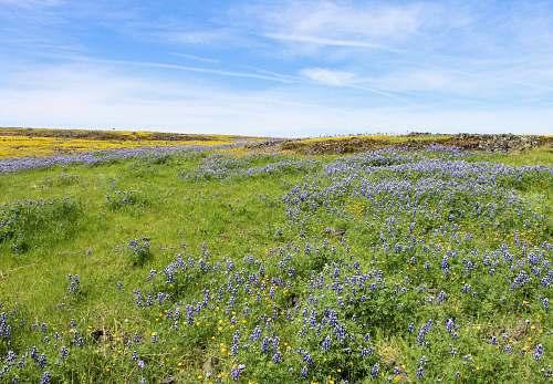 field green-grass field grassland