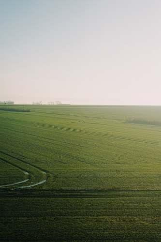 grassland green grass field field