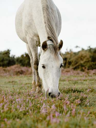 photo field white horse on green grass grassland free for commercial use images