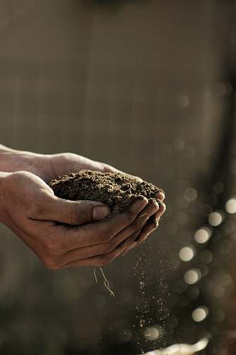 hands bokeh photography of person carrying soil dirt