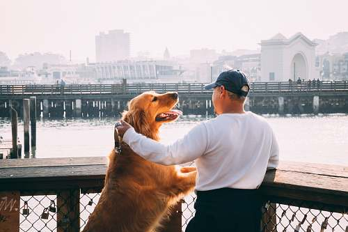 photo human man standing near Golden Labrador retriever viewing bridge and high-rise buildings dog free for commercial use images