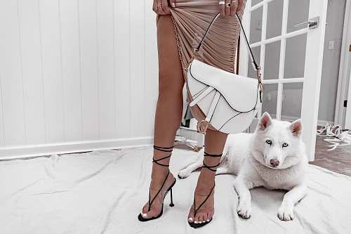 human white dog beside standing woman holdingbag apparel