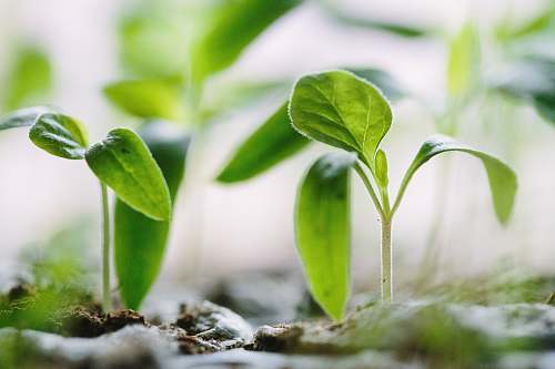 green green plants on soil sprout