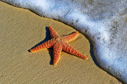 starfish closeup photo of red star fish beside seashore animal