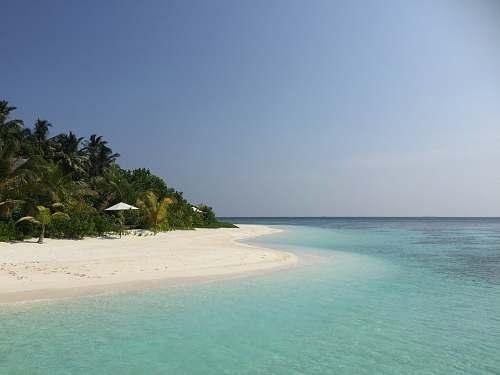 water palm trees beside shoreline ocean