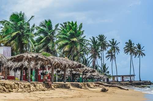 coast person sitting under brown huts near seashore at daytime tree