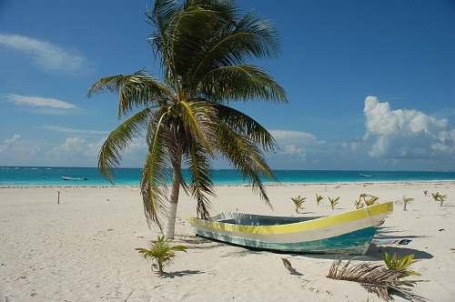 sea photo of boat near seashore and coconut tree coast
