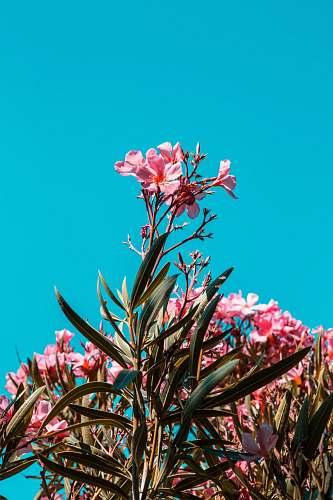 plant pink petaled flowers france