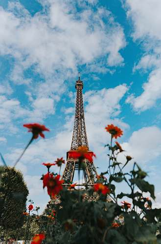 tower tilt shift photography of red flowers and Eiffel Tower tour eiffel