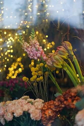 flower yellow flowers blossom
