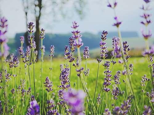 flower tilt shift photography of purple flowers plant