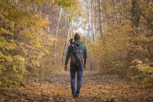 photo person man waling beside trees with backpack kecskemét free for commercial use images