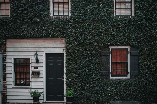 plant photo of house with green leafed covered wall door