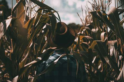 farm person wearing brown trilby hat on corn field fall
