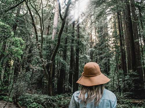 forest person wearing brown sun hat surrounded trees human