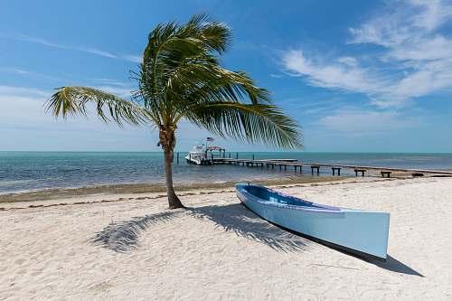 sea white canoe near palm tree water