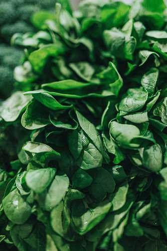 plant green leafy vegetable vegetable