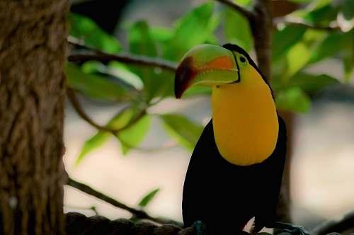 bird macau bird on tree yucatán - cancun