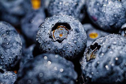 food blueberry fruit blueberry